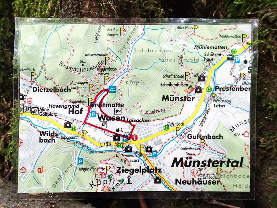 Wildkraeuter-erleben-Rathausroute